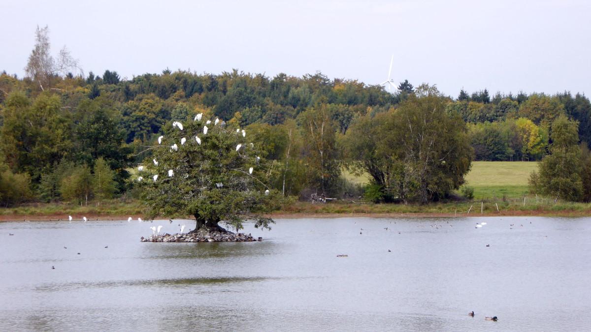 Drei Seen Tour - Freiensteinau - Hoher Vogelsberg