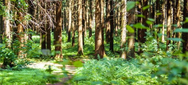 Waldbaden - Shinrin-Yoku - Herchenhain