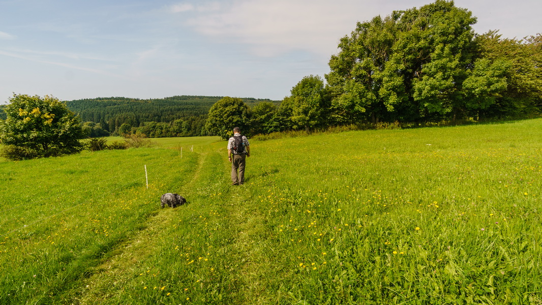 Bergmmaewiesenpfad-Herchenhain-Ernstberg01-Copyright-TW-8.jpg