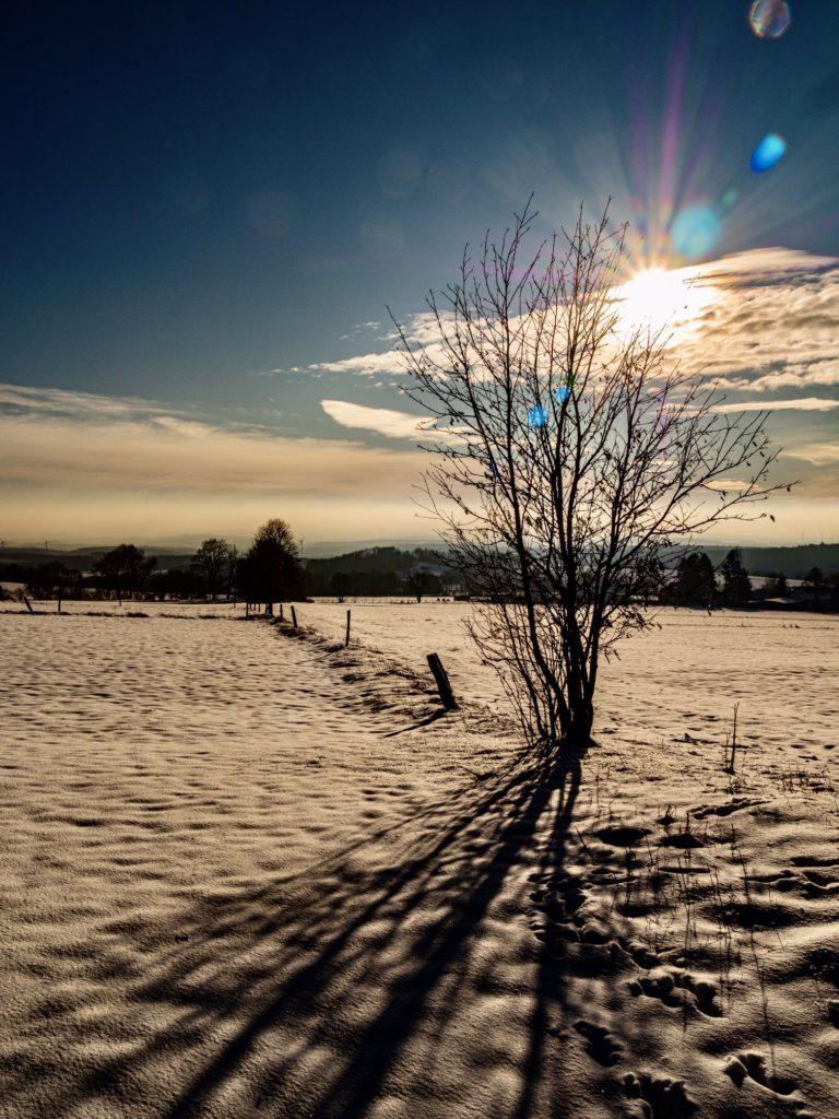 Winter auf der Herchenhainer Höhe- 2020 -01