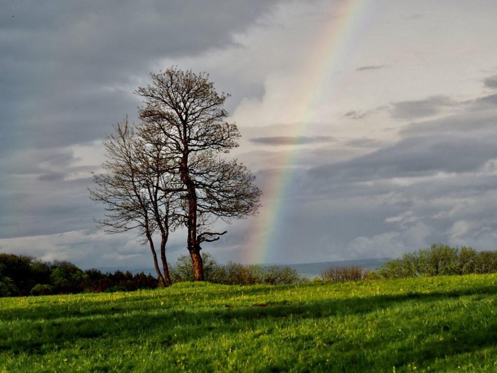 Lieblingsfoto – Mai No. 1 - vogelsbergliebe