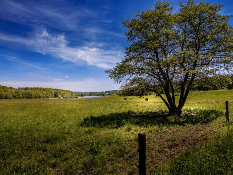Lieblingsfoto – Juni No. 1 - vogelsbergliebe