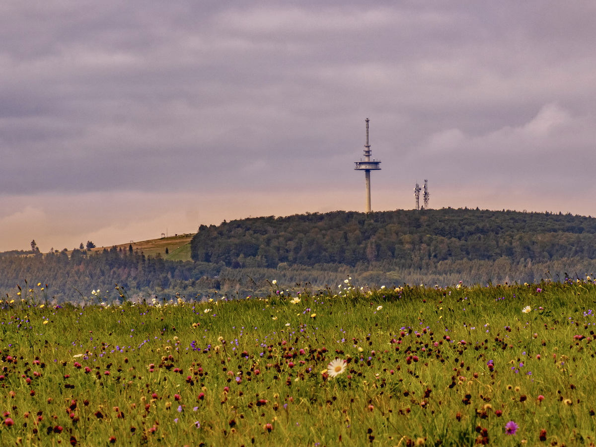 Vogelsbergliebe September 2021 -