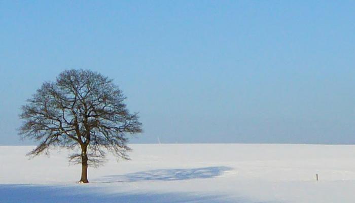 Dezember-Blog-Header-Vogelsberg-Blog.de